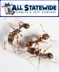 All Statewide Termite and Pest Control