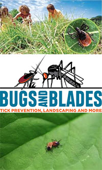 Bugs and Blades